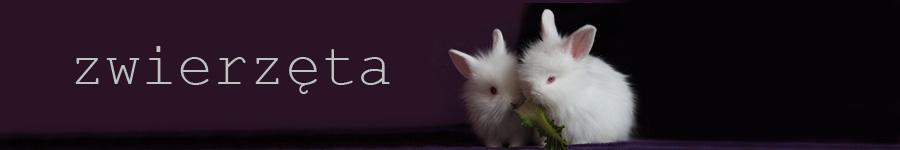 Zdrowie królika | title - http://eko-plotka.pl/